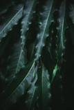 Deep dark green palm leaves pattern - 241589842