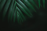 Deep dark green palm leaves pattern. Creative layout, toned image filter effect. Copyspace - 241593866