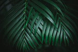 Deep dark green palm leaves pattern. Creative layout, toned image filter effect. - 241594634