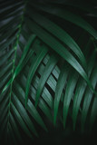 Deep dark green palm leaves pattern. Creative layout, toned image filter effect. - 241596899