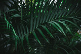 Deep dark green palm leaves pattern. Creative layout, toned image filter effect. - 241597297