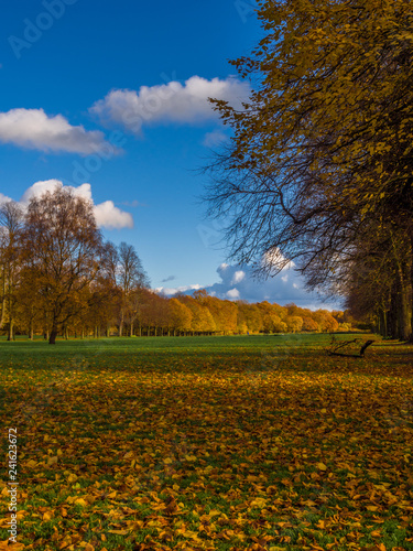 Autumn colours on trees at Marbury Country Park, Marbury, Cheshire, Uk