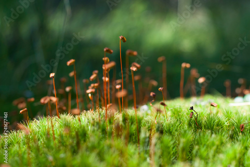 Close up to moss - 241677461