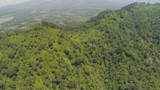 mountain landscape mountains covered green tropical forest, blue sky. aerial view slope mountain forest with large trees and green grass. Jawa, Indonesia