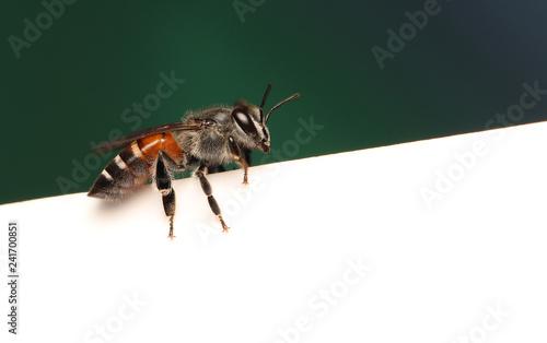 Bee in flower garden - 241700851