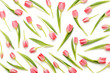 Pink tulip pattern on the white bacjkground. - 241704074