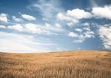 autumn fields - 241704223