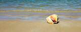 Sea shell on tropical beach. Travel background. - 241705481