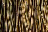 Бамбуковый фон с камнем ракушкой и расческой