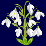 spring bouquet of snowdrops on a blue background