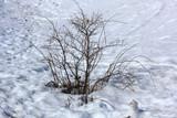 arbuste en hiver - 241736855