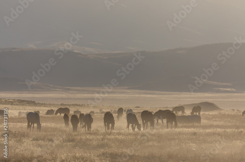 Herd of Wild Horses in the Utah Desert