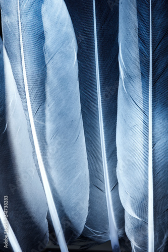 Transparent feathers