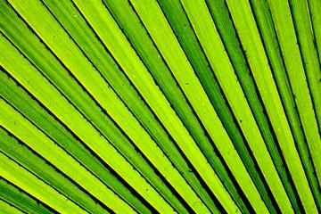 Lines and textures of green palm leaves © sema_srinouljan
