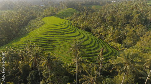 aerial view green rice terrace and agricultural land with crops. farmland with rice fields agricultural crops in countryside Indonesia,Bali