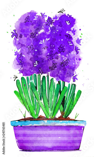 hyacinth in a purple pot watercolor spring illustration isolated