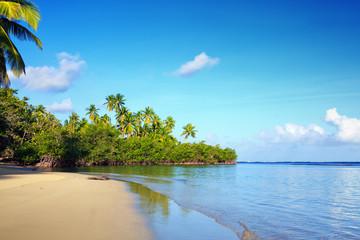 Green palm trees on caribbean beach. Travel background. © Swetlana Wall