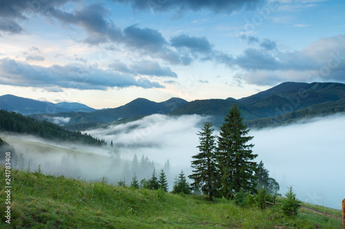 Mountain valley with pines and in the morning fog after rain.