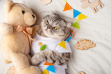 Cute cat with a teddy bear, on a light background with toys. Funny animals, with space for an inscription. Sweet dream - 241798829