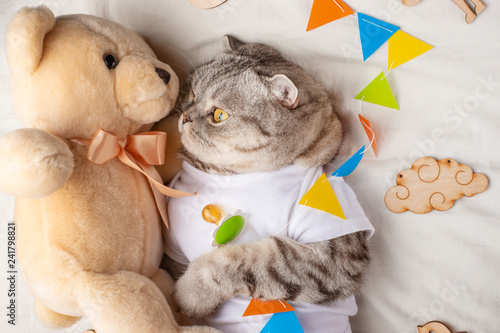Cute cat with a teddy bear, on a light background with toys. Funny animals - 241798821