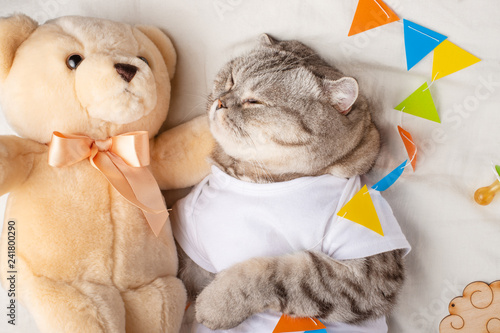 Cat Sleeps In A T Shirt With A Teddy Bear And Childrens Toys Cute