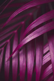 Deep dark purple colored palm leaves pattern. Creative layout, toned image filter effect - 241810811