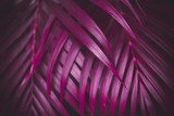 Deep dark purple colored palm leaves pattern. Creative layout, toned image filter effect - 241811233
