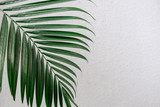 Tropical palm leaves, greenery against white wall. Creative layout, toned image filter, minimalism - 241811618