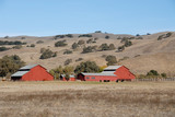 Red barn & brown hills - 241820012