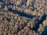 vue aérienne de la forêt en hiver à Dreux dans l'Eure-et-Loir en France - 241820254