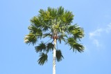 palm tree on background of blue sky - 241822011