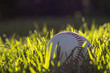 White baseball in the grass on a warm, sunny afternoon