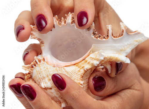 mata magnetyczna Sea shell in the hands of a girl on a white background