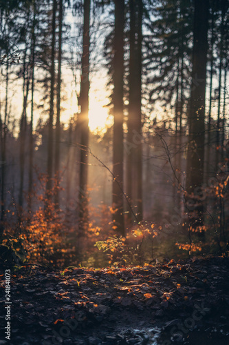 Sonnenuntergang im Wald mit Nebel im Herbst mit Blättern im Vordergrund