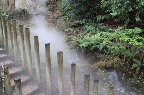Jungle humide