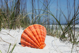 Sea shell on Florida beach - 241853841