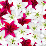 Seamless floral pattern. Chaotic arrangement of flowers. Red and white lily flower on a bright magenta background.
