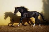 black stallion with long mane - 241878040