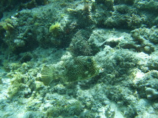 Mexico Cozumel Summer Under water Malinelife Blow fish