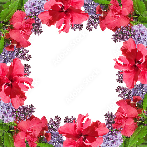 Beautiful floral background of Chinese rose and lilac  - 241894881
