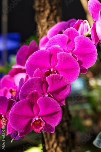 Purple wild orchid - 241905243