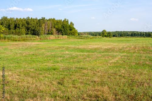 Grassland summer landscape