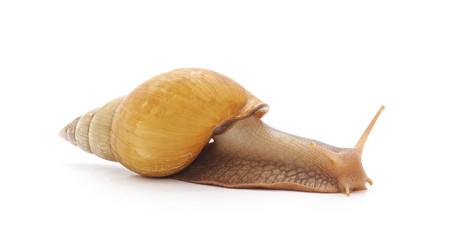 One big snail. © voren1