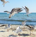 flock of seagulls on the beach on a summer sunny day