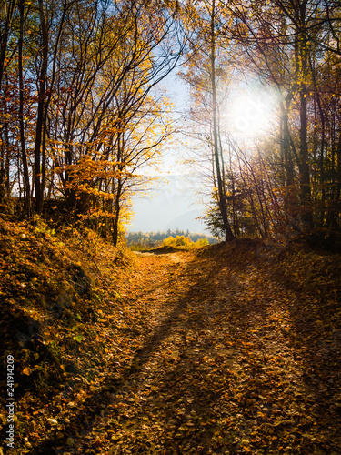 Trail covered by fallen leaves in Beskids Mountains in autumn. Nearby Piwniczna-Zdroj, Poland. Backlit sun.