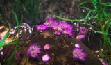 corals in a marine aquarium