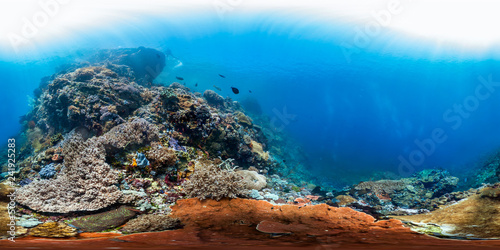 360 of healthy reef in Indonesia