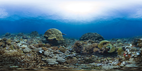 A healthy croal reef in the Philippines