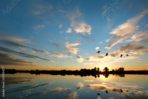 Scenic - Waterfowl - 241934217