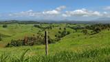 Lush rolling green pastures - 241941033